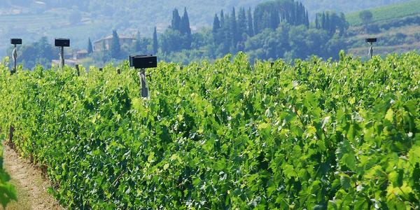 hauts parleurs dans les vignes